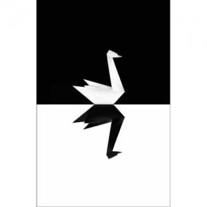 cisne_negro